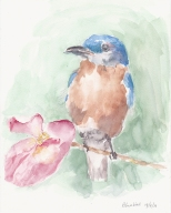 Blue bird
